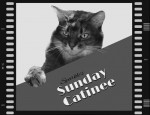 Sunday Catinee: Curtain-Climbing SpiderCats