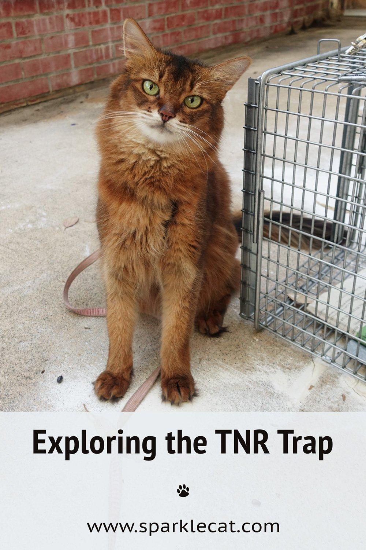 Exploring the TNR Cat Trap
