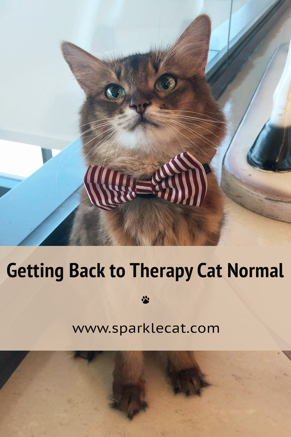 Getting Back to Therapy Cat Normal