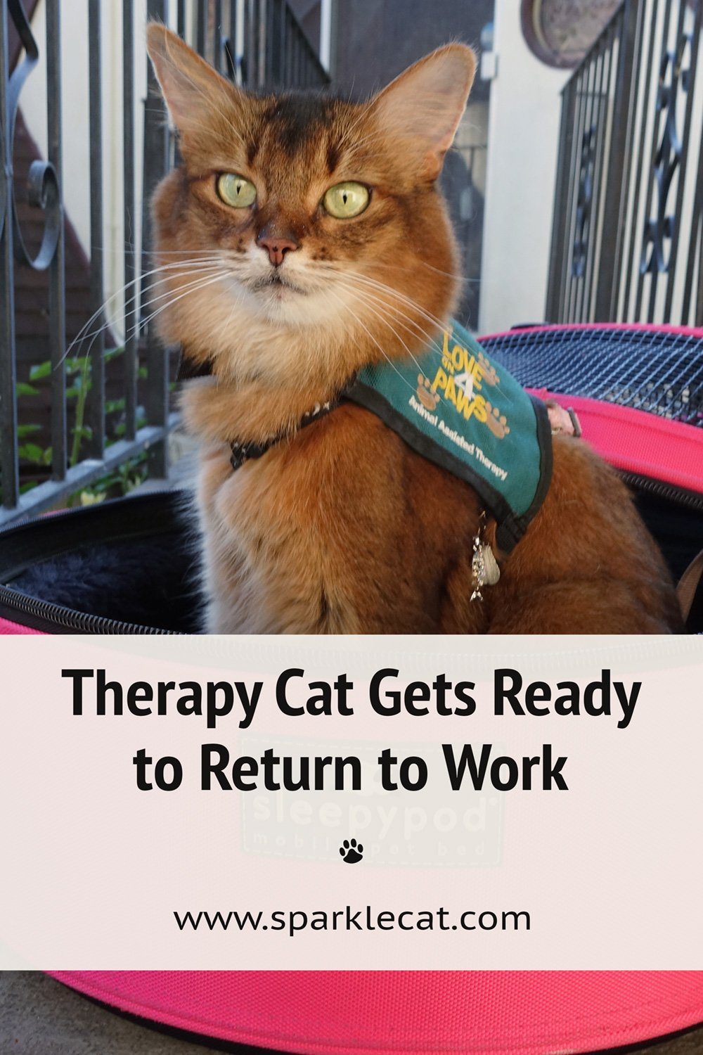 Preparing for My Therapy Cat Return - on Video!