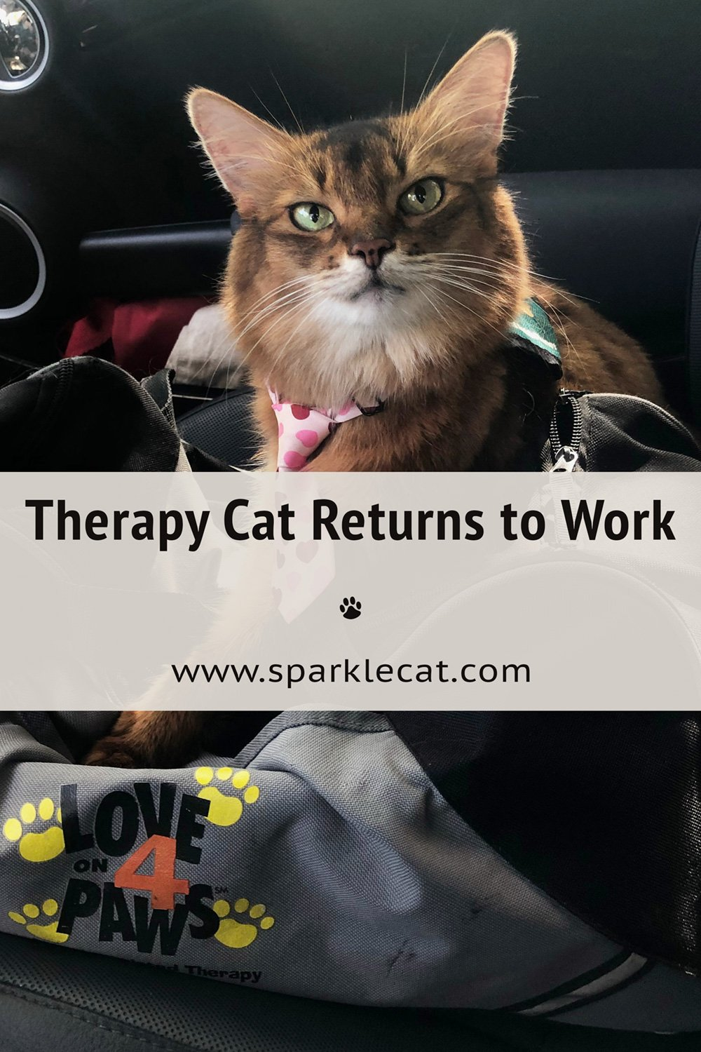 Returning to Therapy Cat Work
