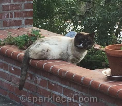 tom cat in nip garden