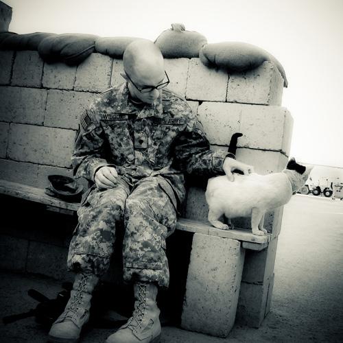Tom and Iraqi Kitty