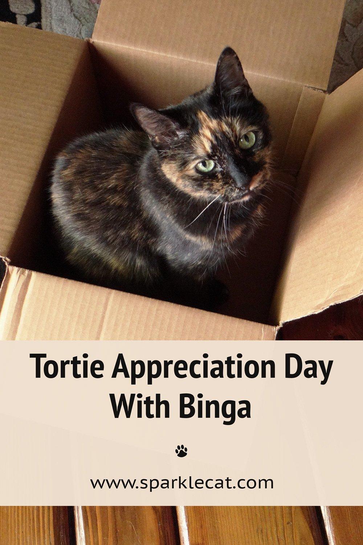 Tortie Appreciation Day, Featuring Binga