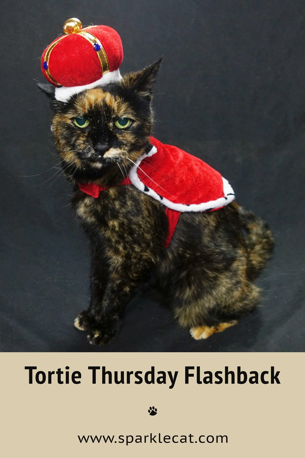 Tortie Throwback Thursday - Binga Doing What She Did Best