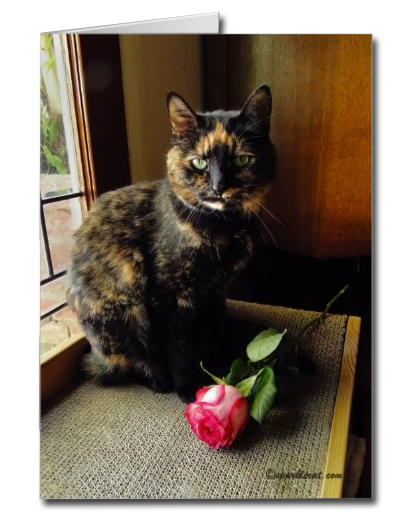 Tortoiseshell Cat and Rose Card