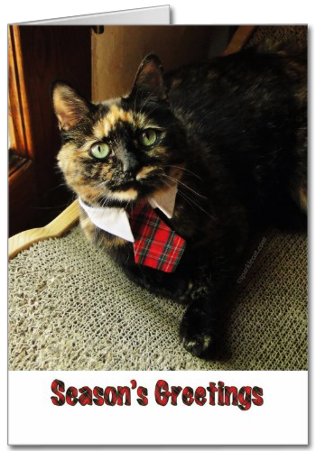 Tortie Seasons Greetings Card, featuring Binga