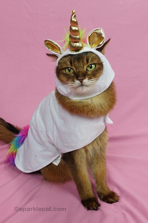 Unicorn Cat Costume Time, on Video!
