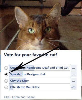 Vote here!