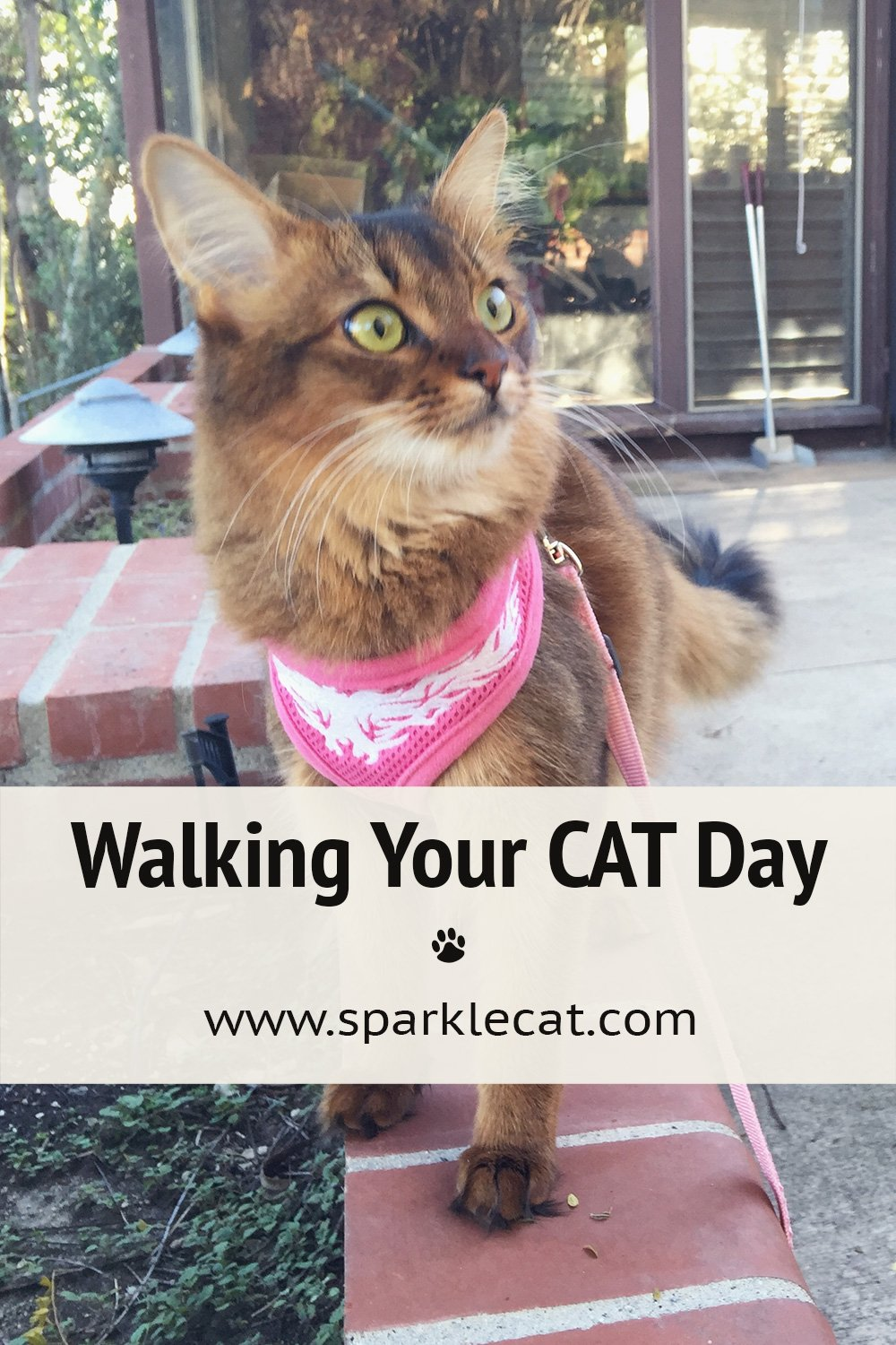 Walking Your CAT Day!