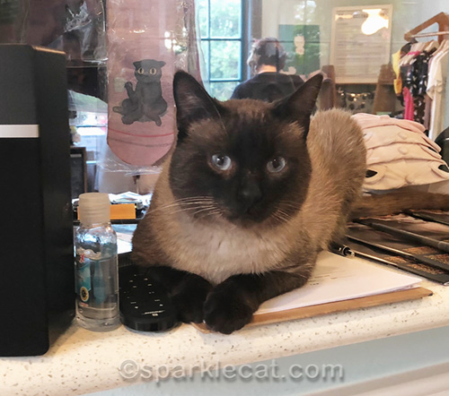 one of two cat cafe cats featured for this blog post