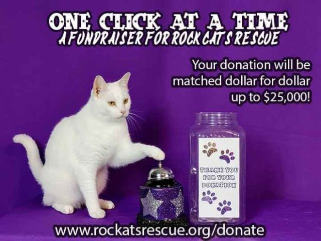 Donate to Rock Cats Rescue