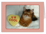 Valentine Kitty U R Cool Card